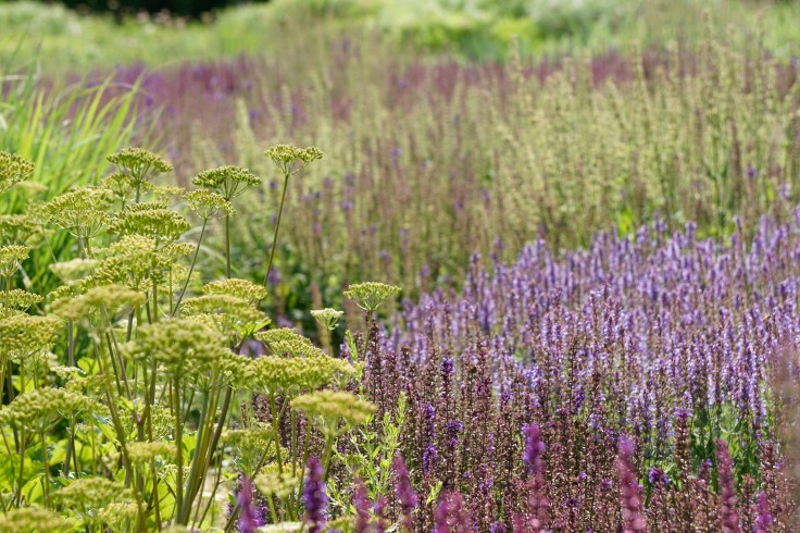 lurie-gardens-purple-and-yellow