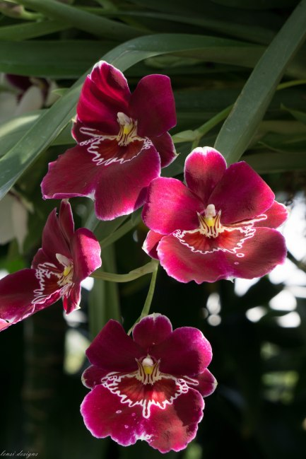 orchid-show_16698145035_o